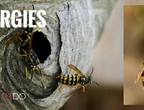 Bee Allergies