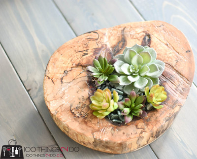 Log succulent planter, succulent planter, log planter, succulent dish, natural decor, branch decor