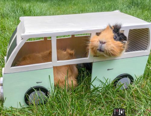 DIY Guinea Pig Hide