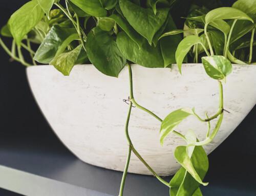 Updating a thrift store planter